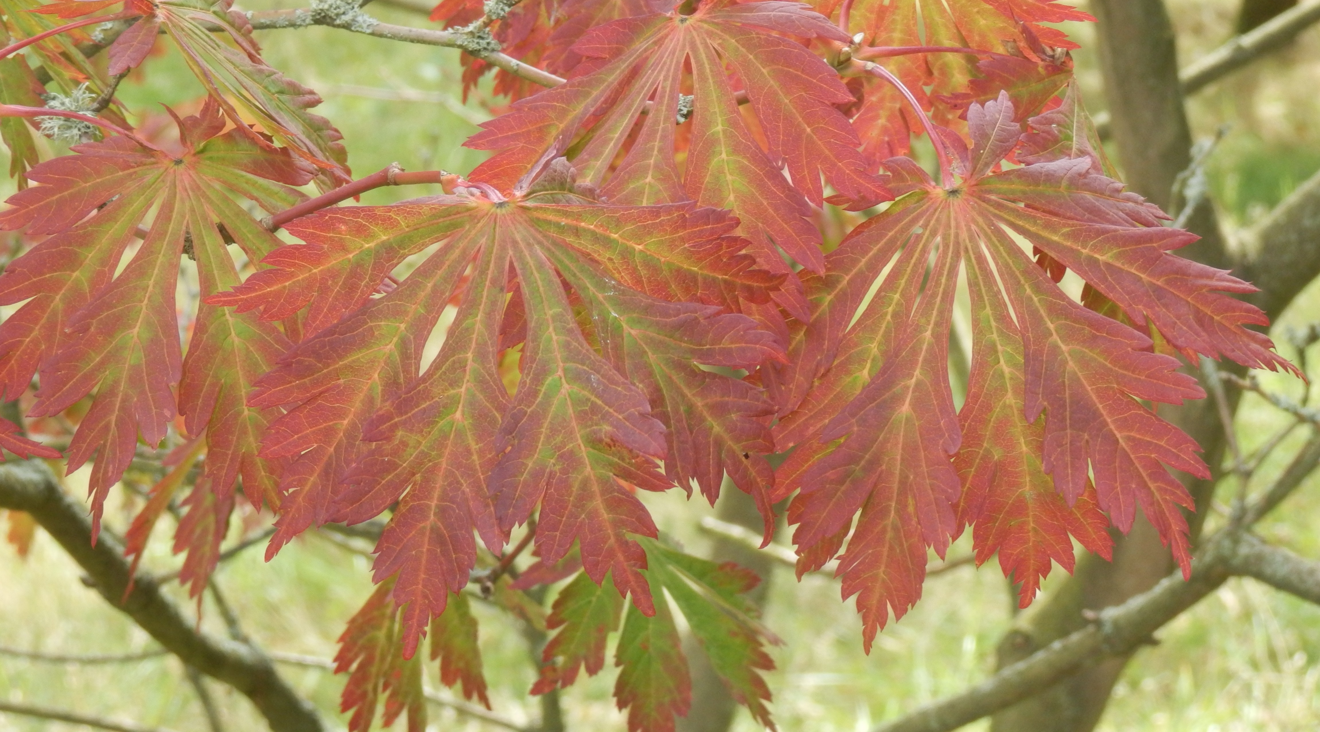 Tips On How To Stay Healthy This Autumn